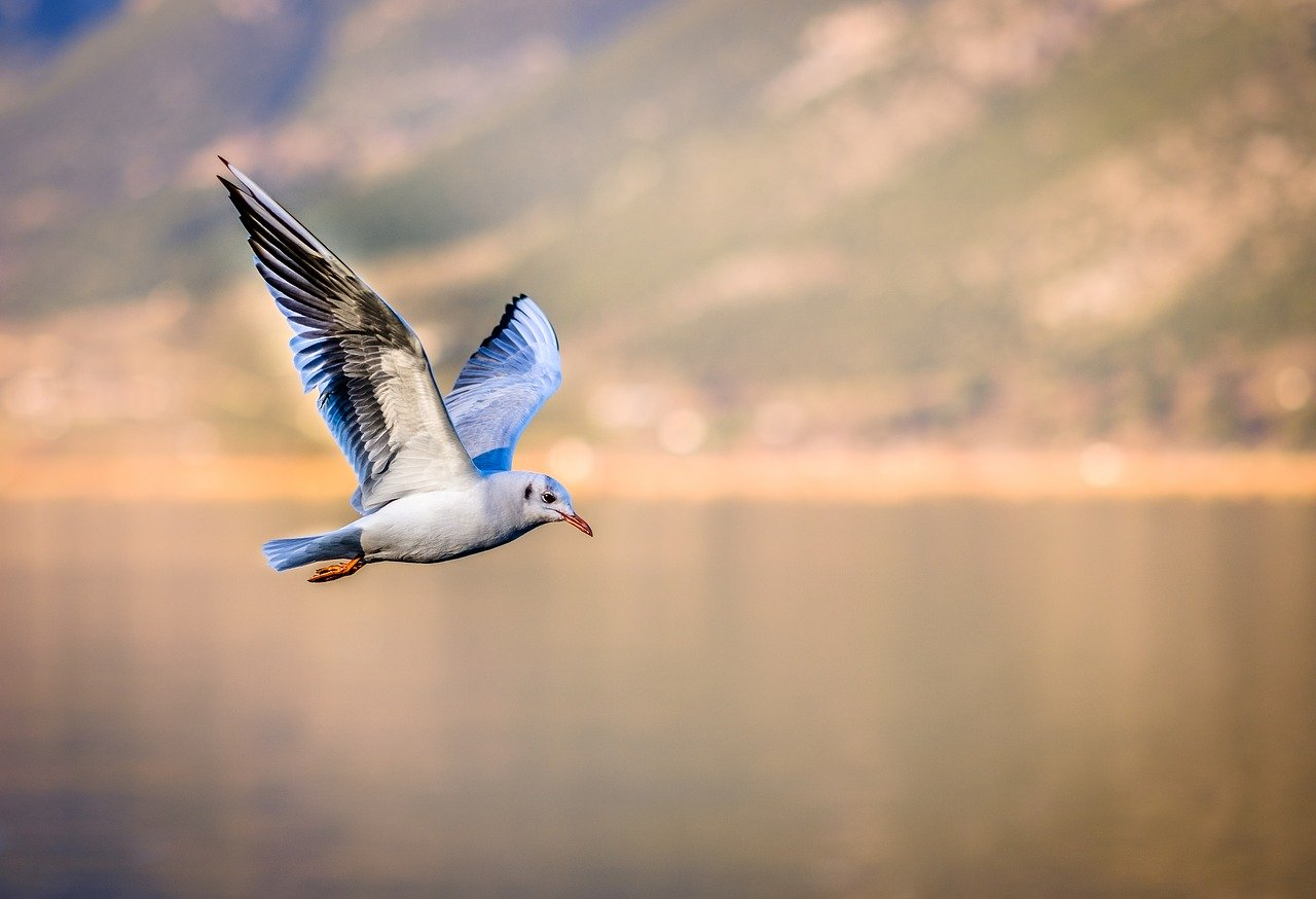 blue and white colored seagull flying in the air