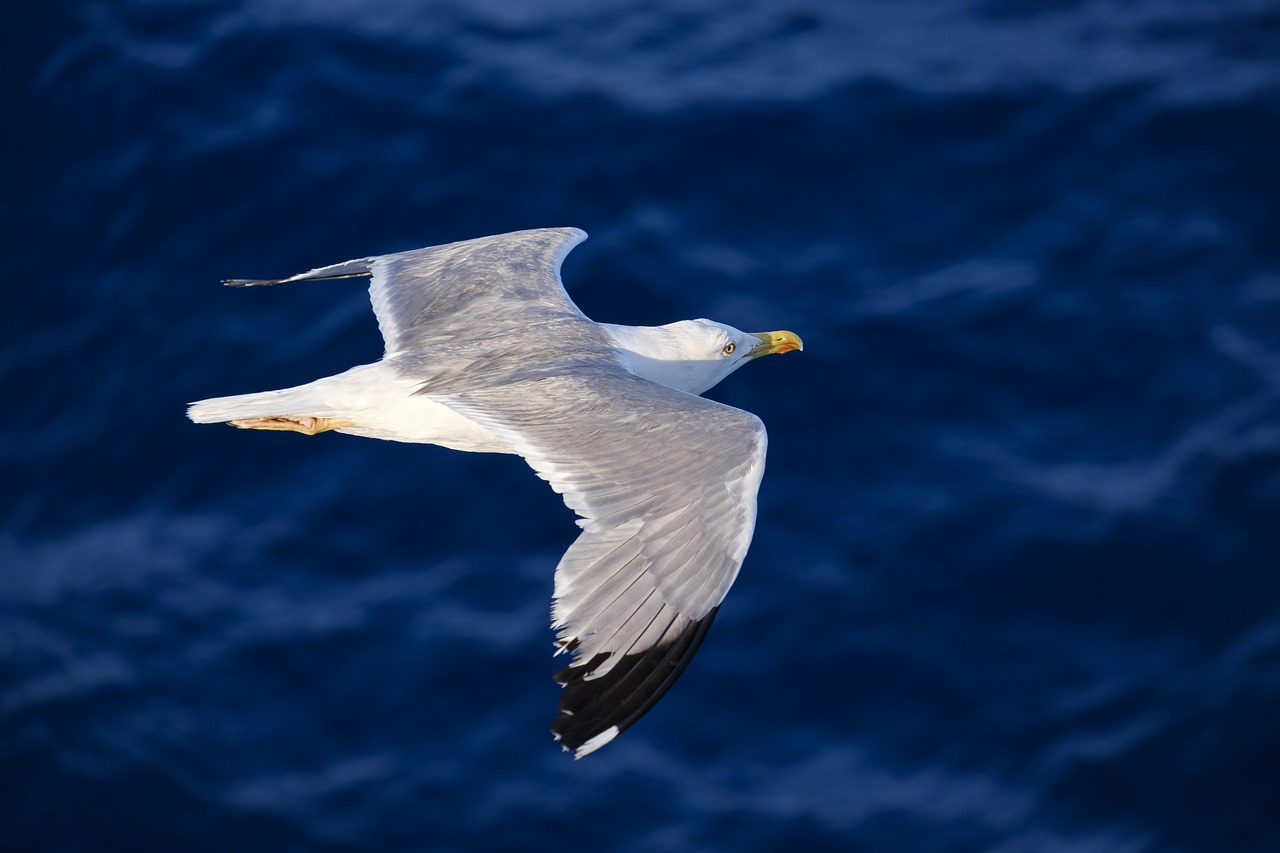 white seagull flying over blue water