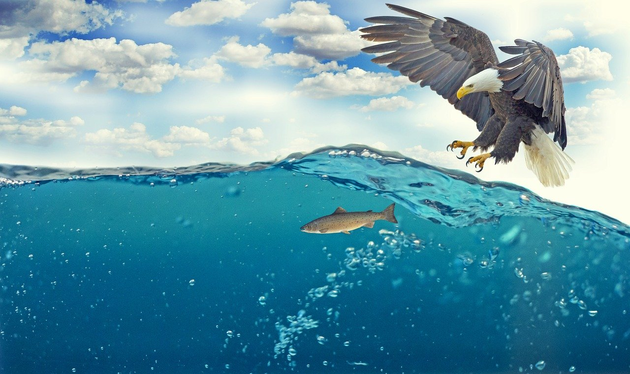 a picture of an eagle about to catch a fish in the ocean